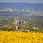 Corfe Castle Purbeck Dorset History